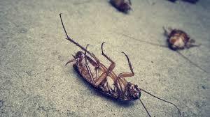 ابادة حشرات المنزل فوريا