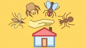 اضرار الحشرات